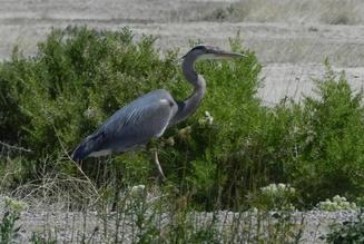 Card fit stillwater national wildlife refuge